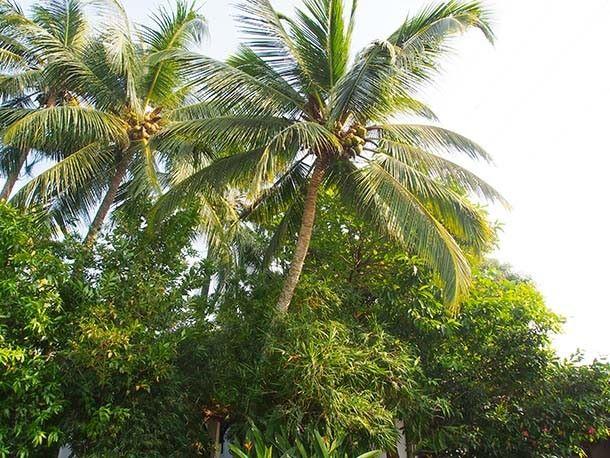 Fort Kochi, Kerala, Intia